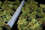 U Beranama uhapšeni zbog narkotika: Motorom prevozili drogu