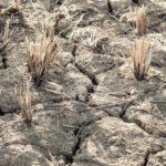 Suša u Sjevernoj Koreji