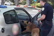 Podnesena prekršajna prijava zbog pronalaska narkotika u Herceg Novom
